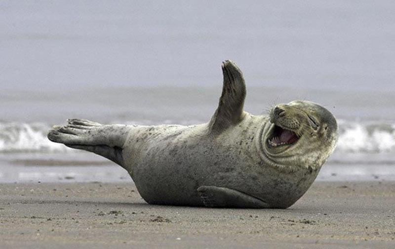 smiling cute seal