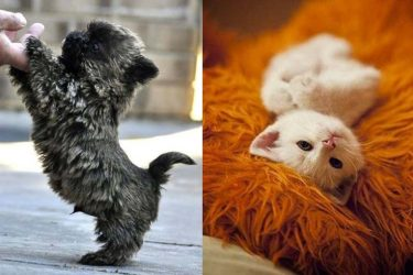 Animal Cuteness Battle – Cute Kitten vs Cute Puppy