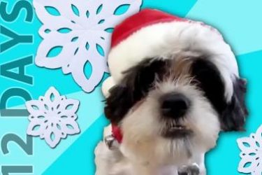 Talking Pets Sing 12 Days of Christmas
