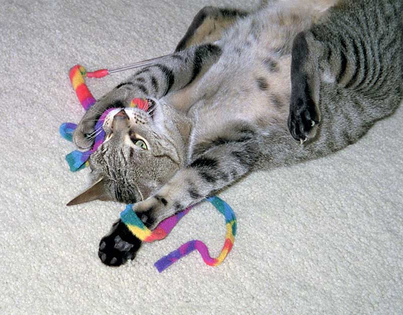10 Most Popular Cat Toys on Amazon Under 20 Dollars