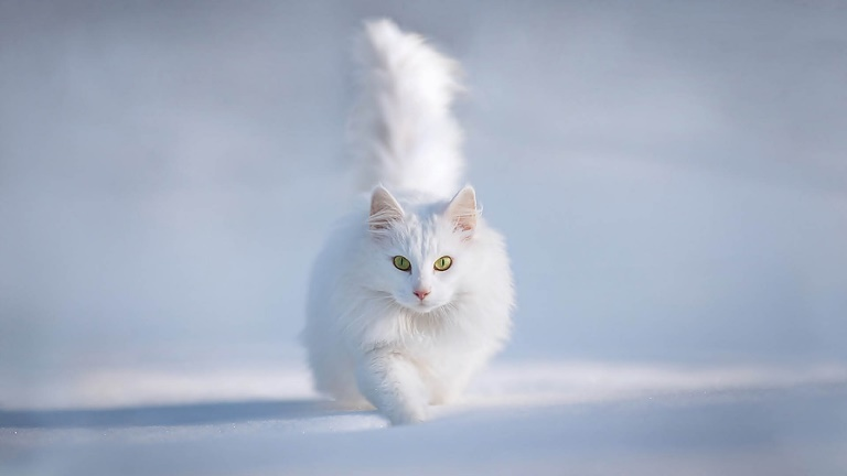 Cats playing in snow 11