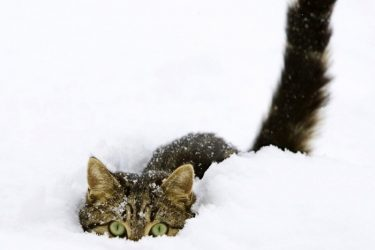 Cats Playing In The Snow