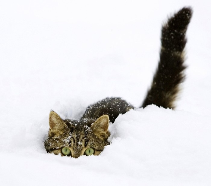Cats playing in snow 12