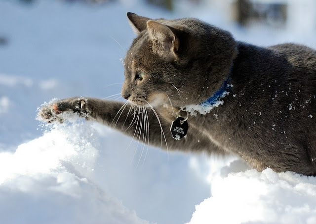 Cats playing in snow 14