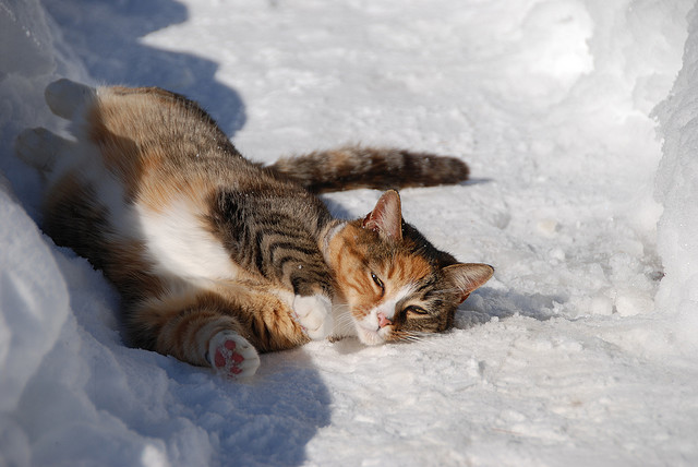 Cats playing in snow 15