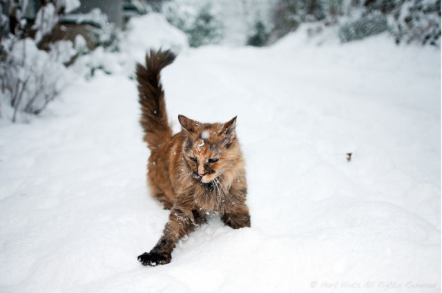 Cats playing in snow 16