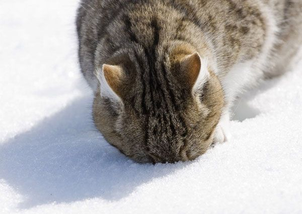 Cats playing in snow 20