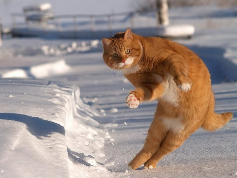 Cats playing in snow 3