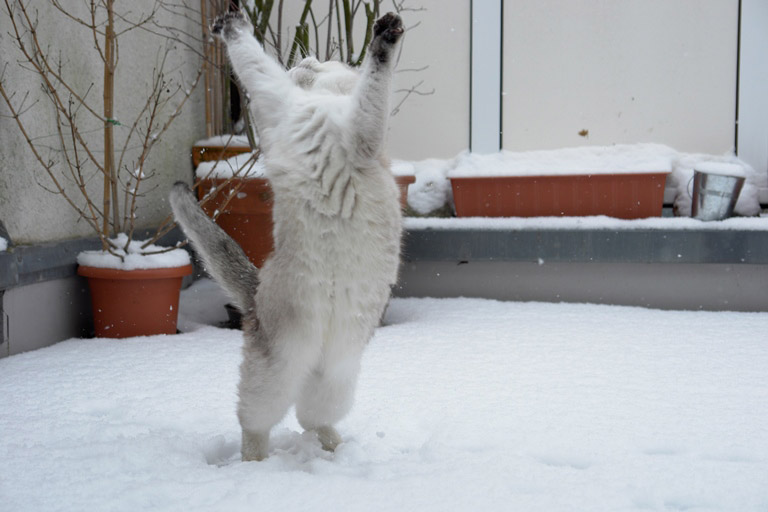 Cats playing in snow 4