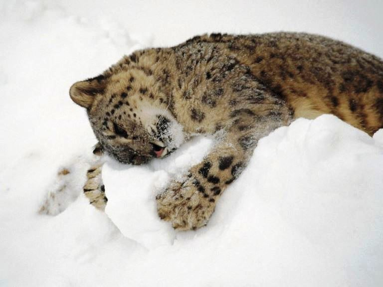 Cats playing in snow 5