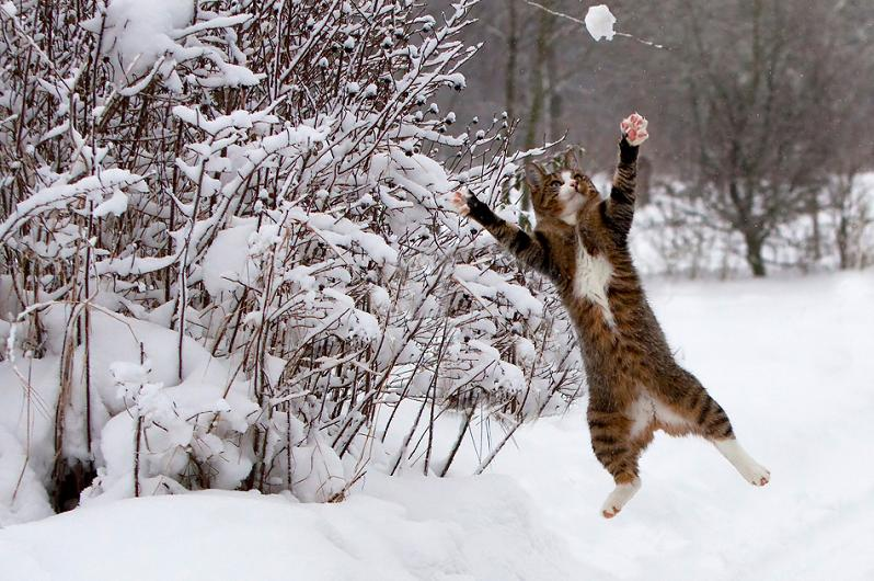 Cats playing in snow 6