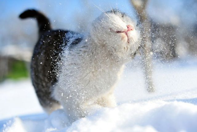Cats playing in snow 7