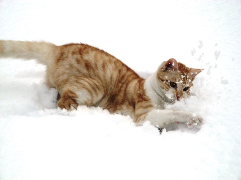 Cats playing in snow 8