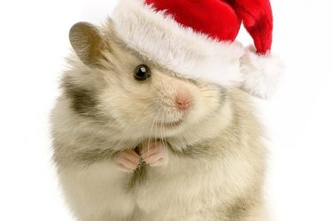 18 Adorable Christmas Pet Pictures