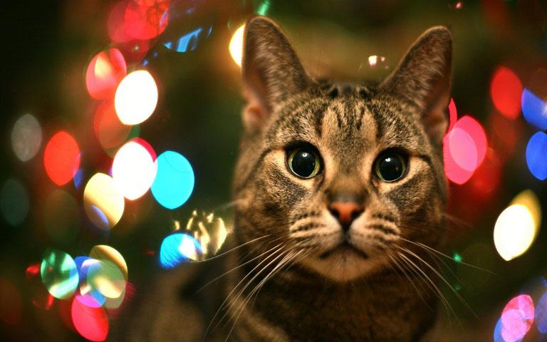 Christmas pet photos12