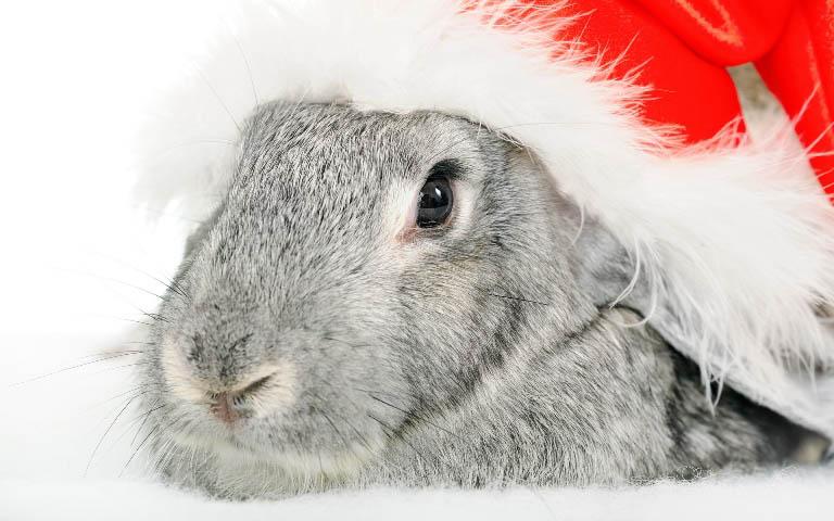 Christmas pet photos14