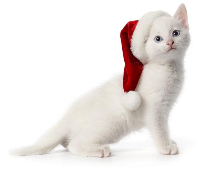 Christmas pet photos16