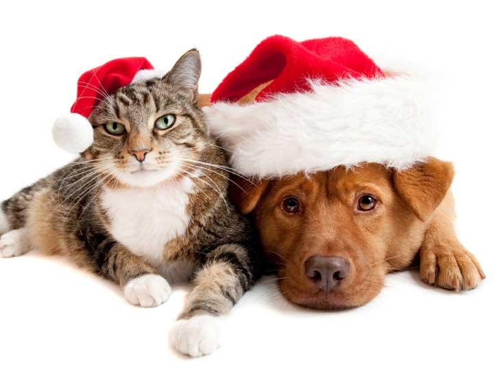 Christmas pet photos17