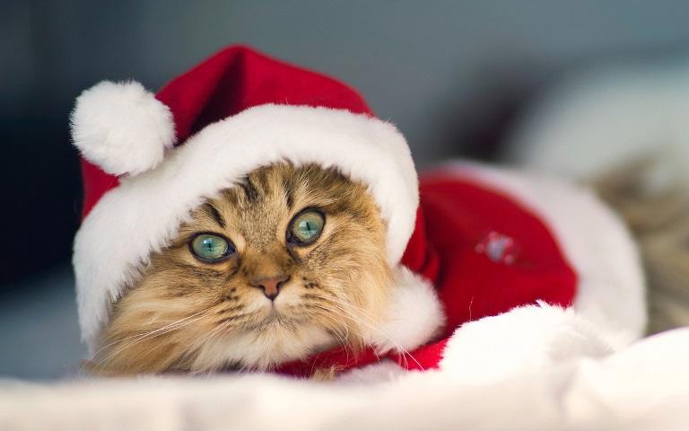 Christmas pet photos9