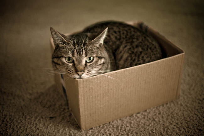 cats in boxes10