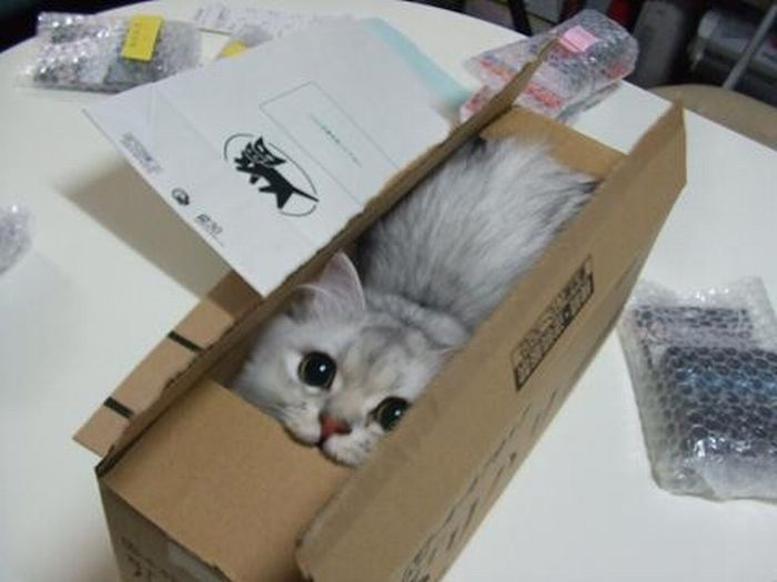 cats in boxes11