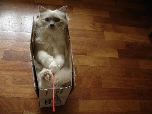 cats in boxes12