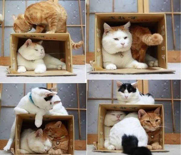 cats in boxes13