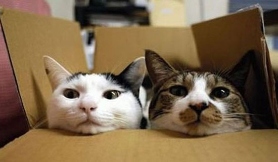 cats in boxes14