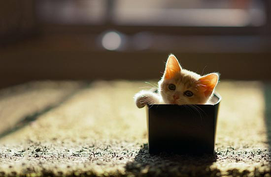 cats in boxes15