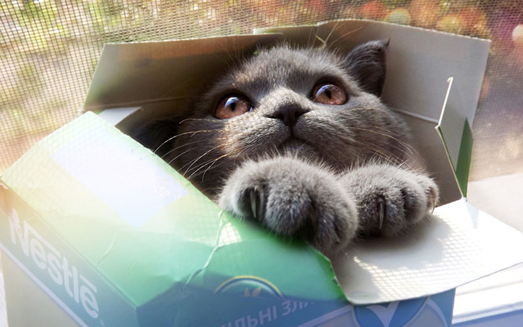 cats in boxes19