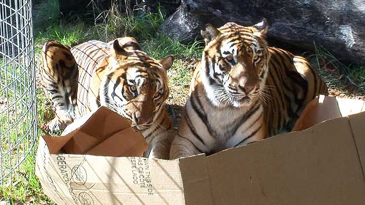 cats in boxes23