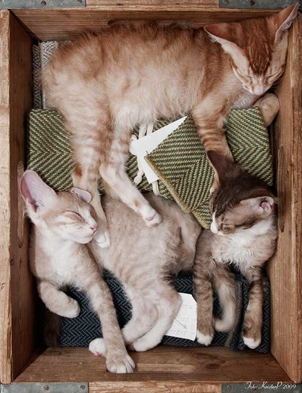 cats in boxes3