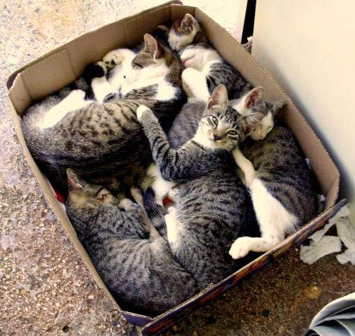 Cute Pictures Of Cats In Boxes