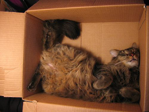 cats in boxes9
