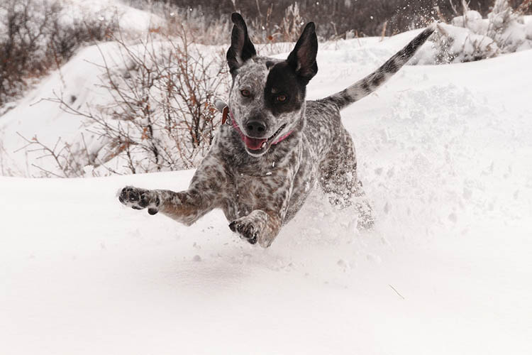 25 dogs that really love snow