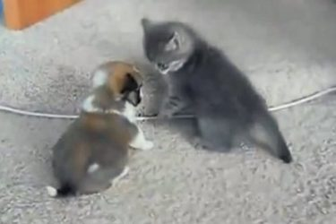 The Cutest Fight Ever