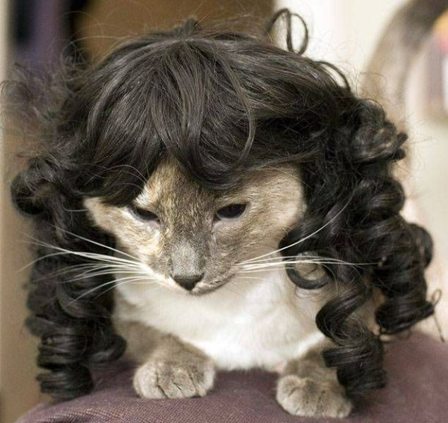 Funny Pets Wearing Wigs Pictures