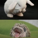 Animal Cuteness Battle – Bunny vs Hedgehog
