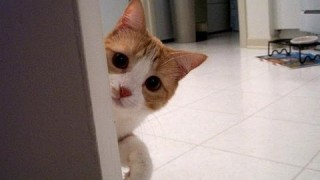 Ultimate Funny Stalking Cat Compilation