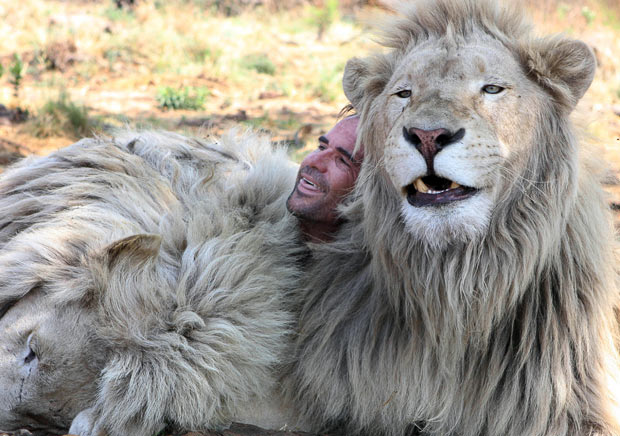 lion whisperer12