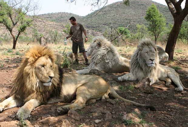 lion whisperer14