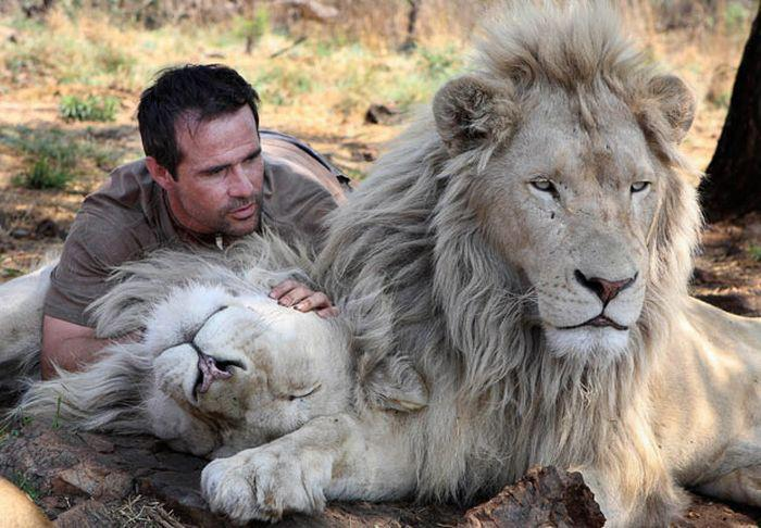 lion whisperer7