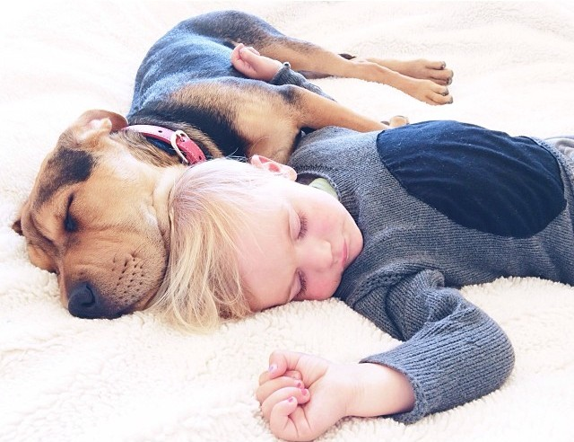 toddler naps with puppy 4