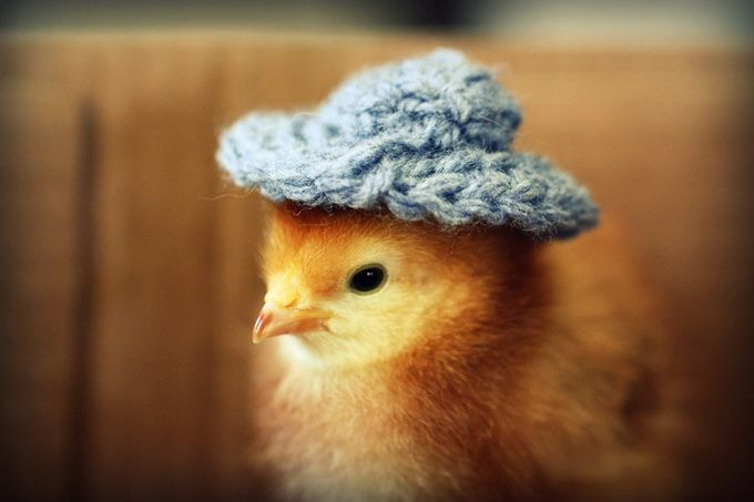 Chicks In Hats10