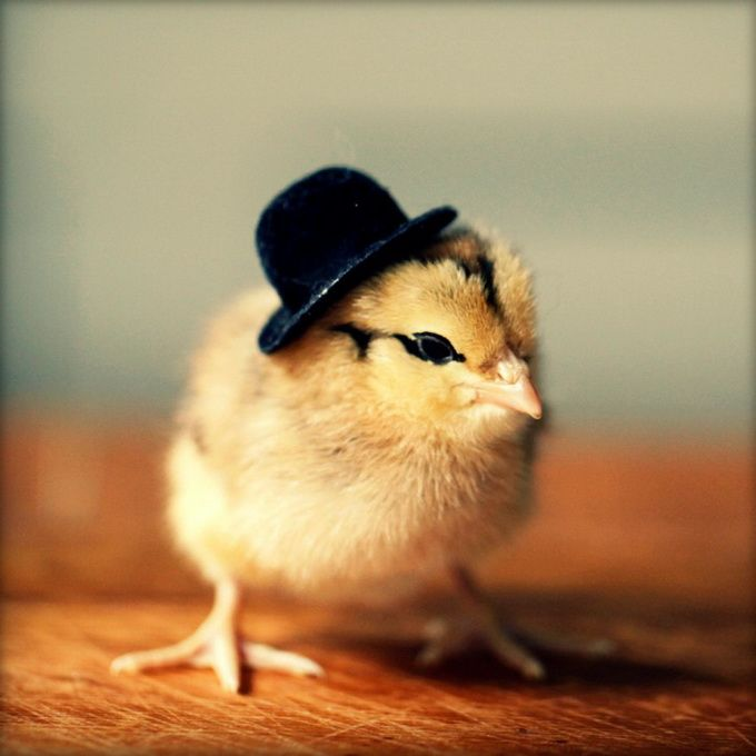 Chicks In Hats5