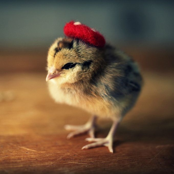 Chicks In Hats7