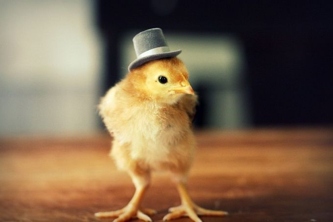 Chicks In Hats9