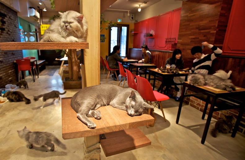 Cat cafe japan
