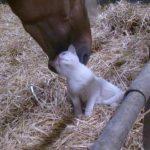 Loving Horse Pets A Cat