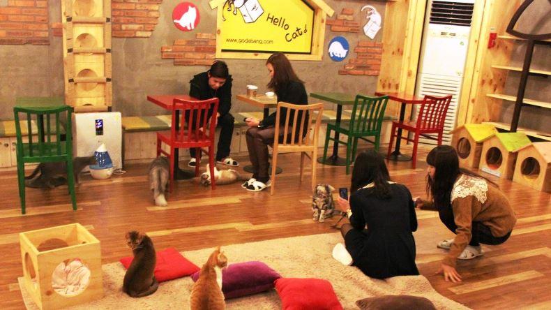 cat cafe japan2